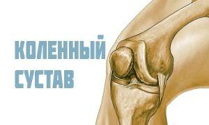Строение коленного сустава человека, вальгусная и варусная деформация