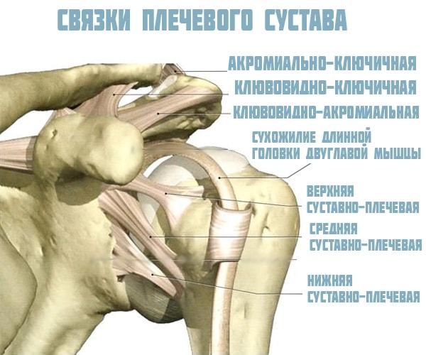 Связочный аппарат плеча